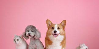 beneficii animale companie